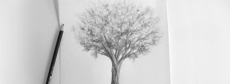comment-dessiner-un-arbre-dessin-creation-750x375